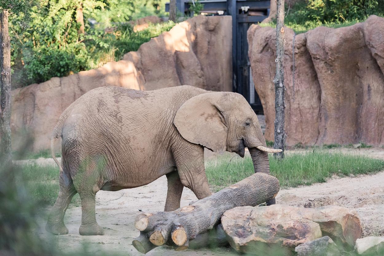 dallas-zoo-wedding_0265.jpg