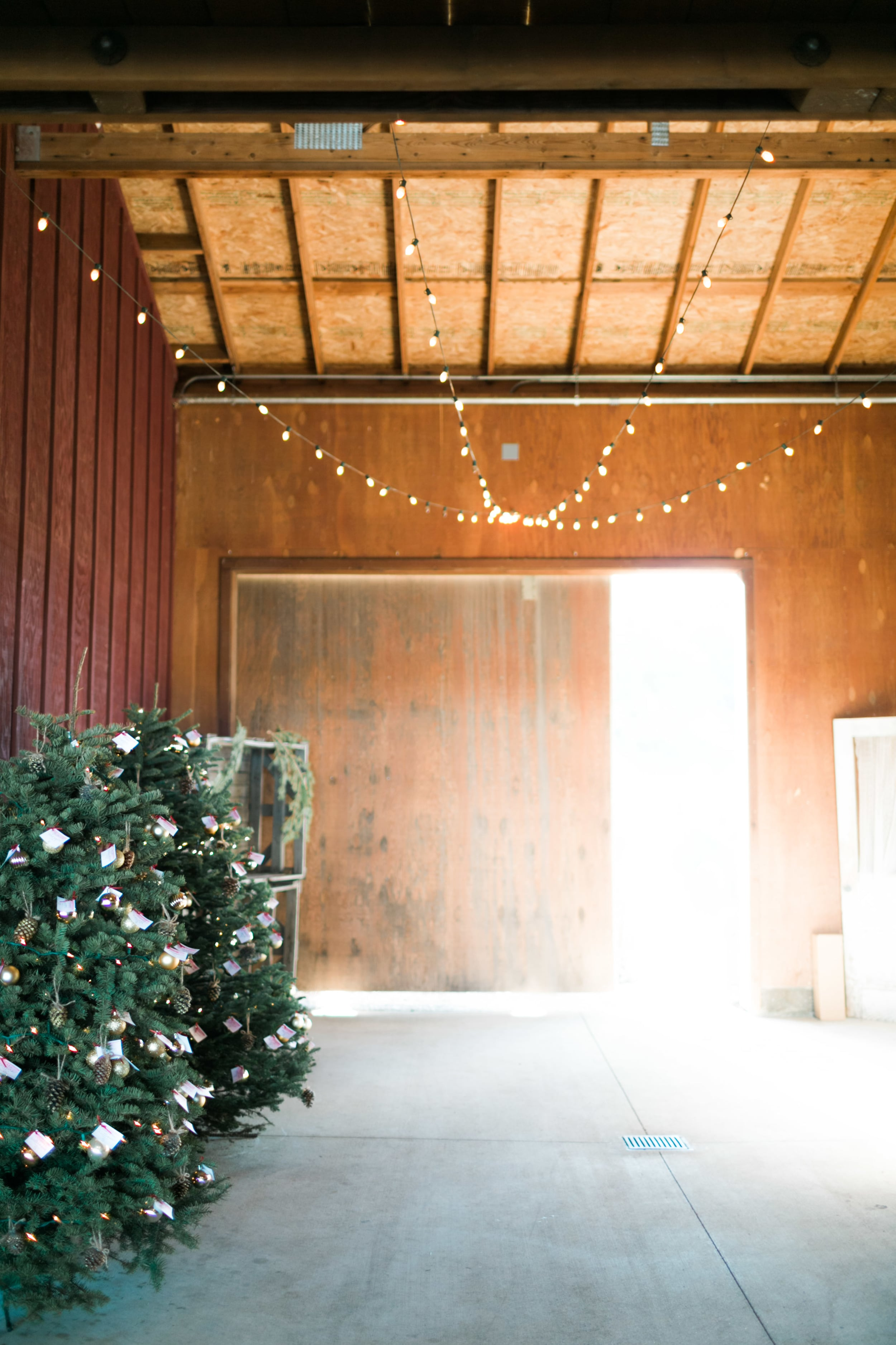 Natalie_Schutt_Photography_Winter_Wedding_San_Luis_Obispo-84.jpg