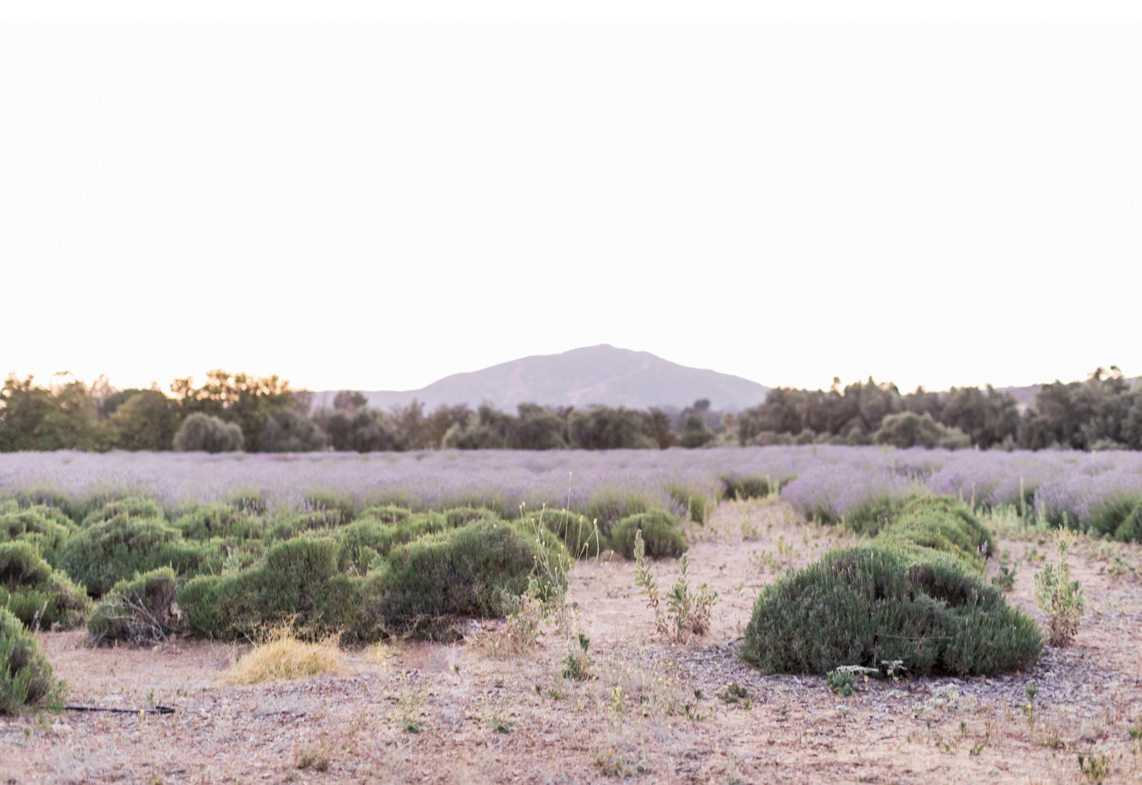 California-Lavender-Field-Wedding-Natalie-Schutt-Photography-Style-Me-Pretty_04.jpg