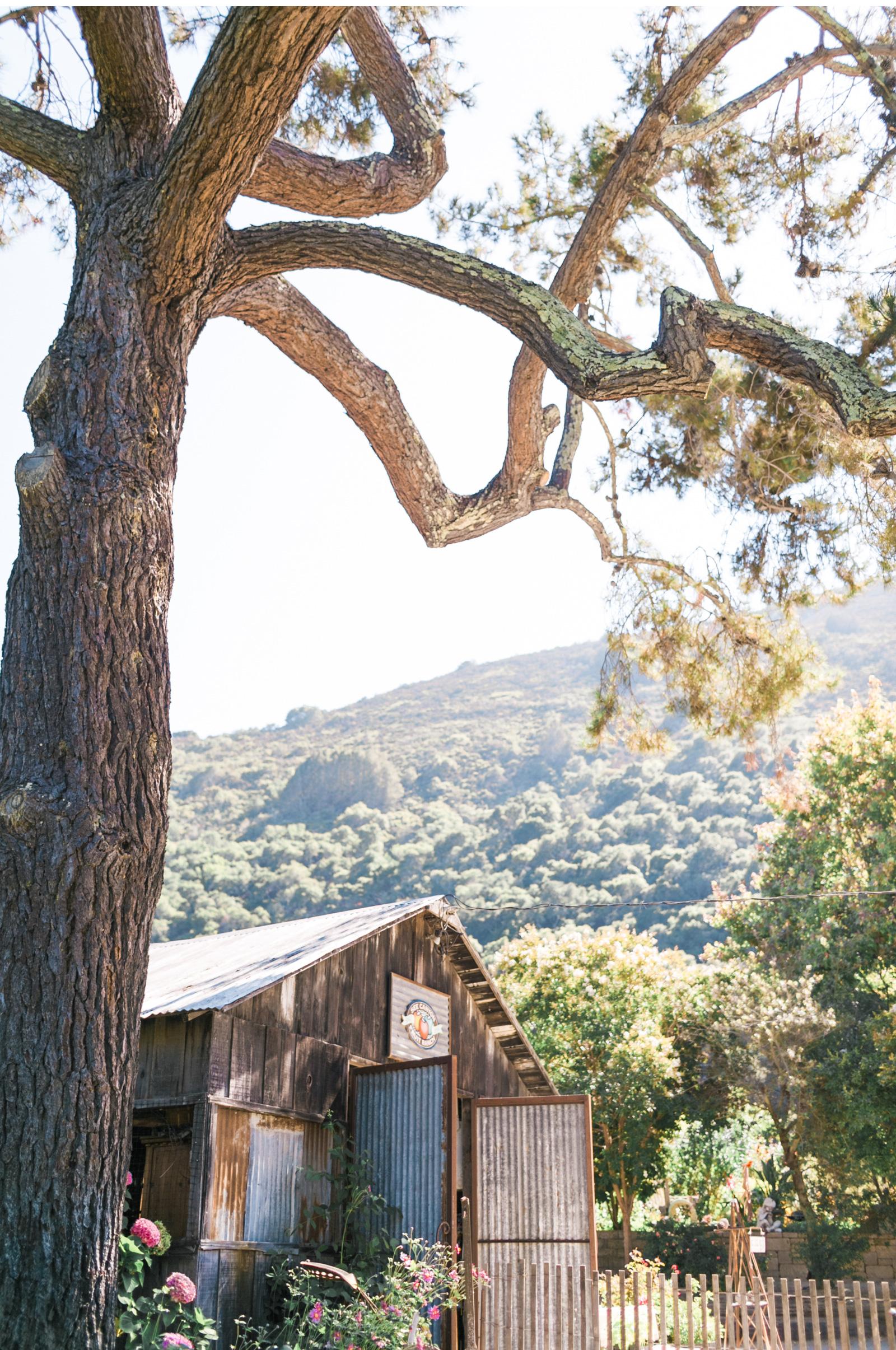 Sea-Canyon-Fruit-Ranch-Wedding-Natalie-Schutt-Photography_10.jpg