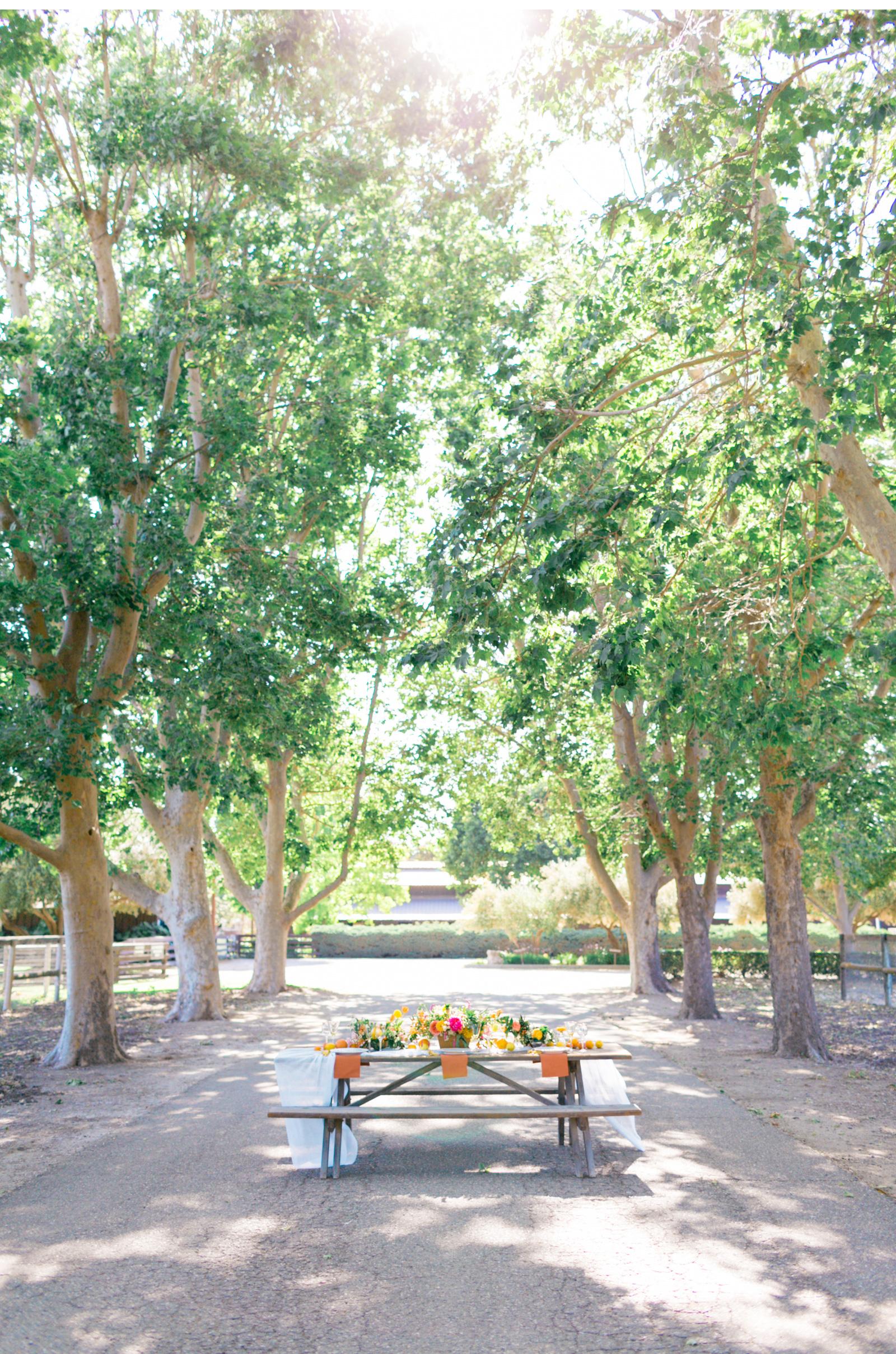 San-Luis-Obispo-Wedding-Photographer-Hammersky-Vineyard-Natalie-Schutt-Photography_11.jpg