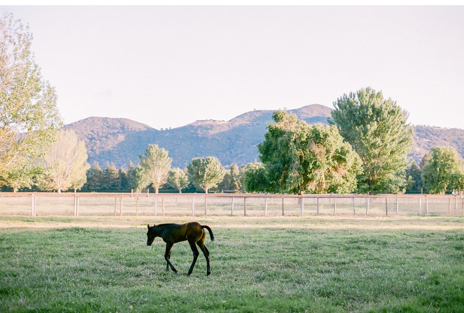 Whispering-Rose-Ranch-Wedding-Natalie-Schutt-Fine-Art-Photography-Style-Me-Pretty_12.jpg