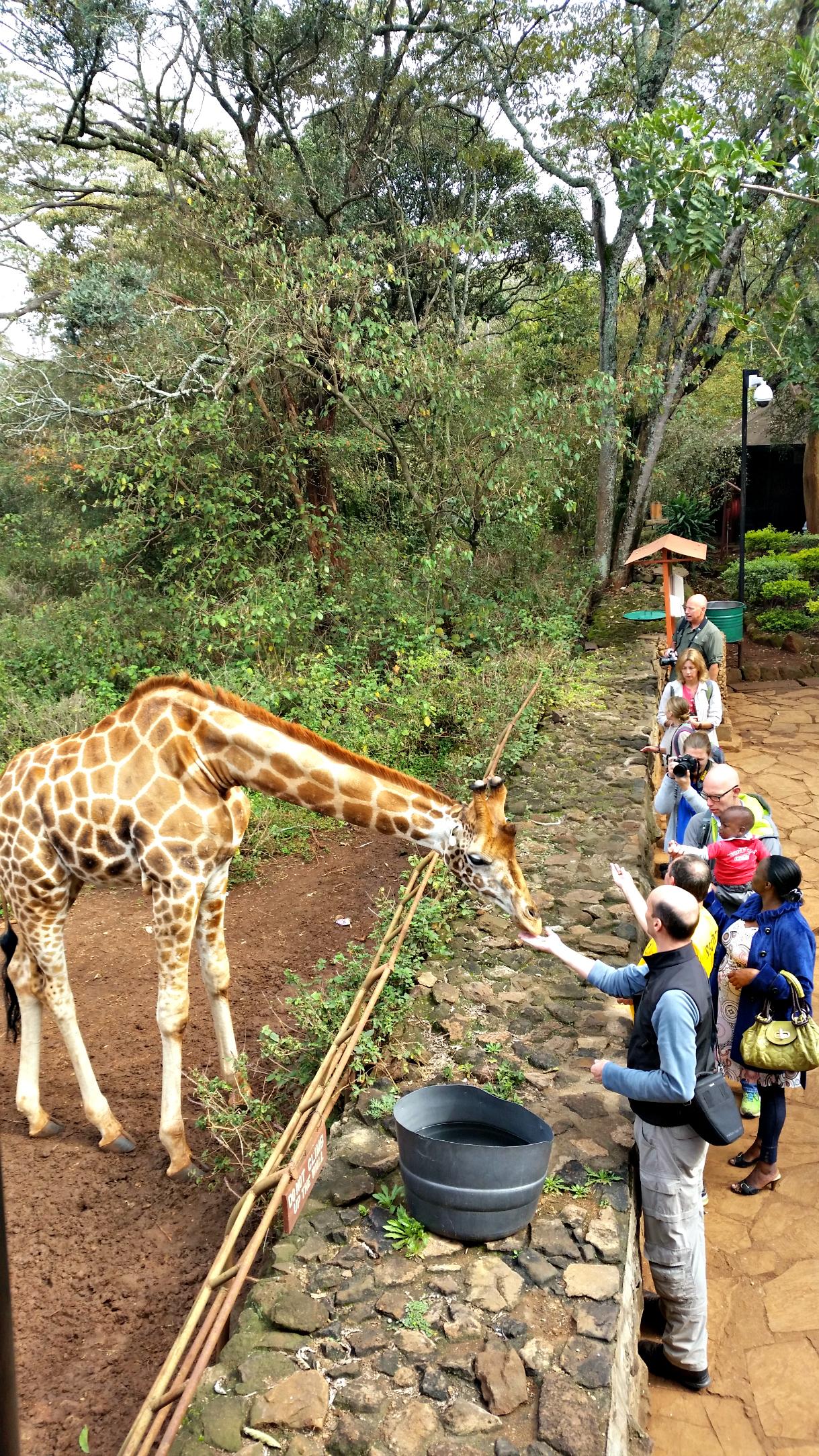Giraffe 20140713_095510.jpg