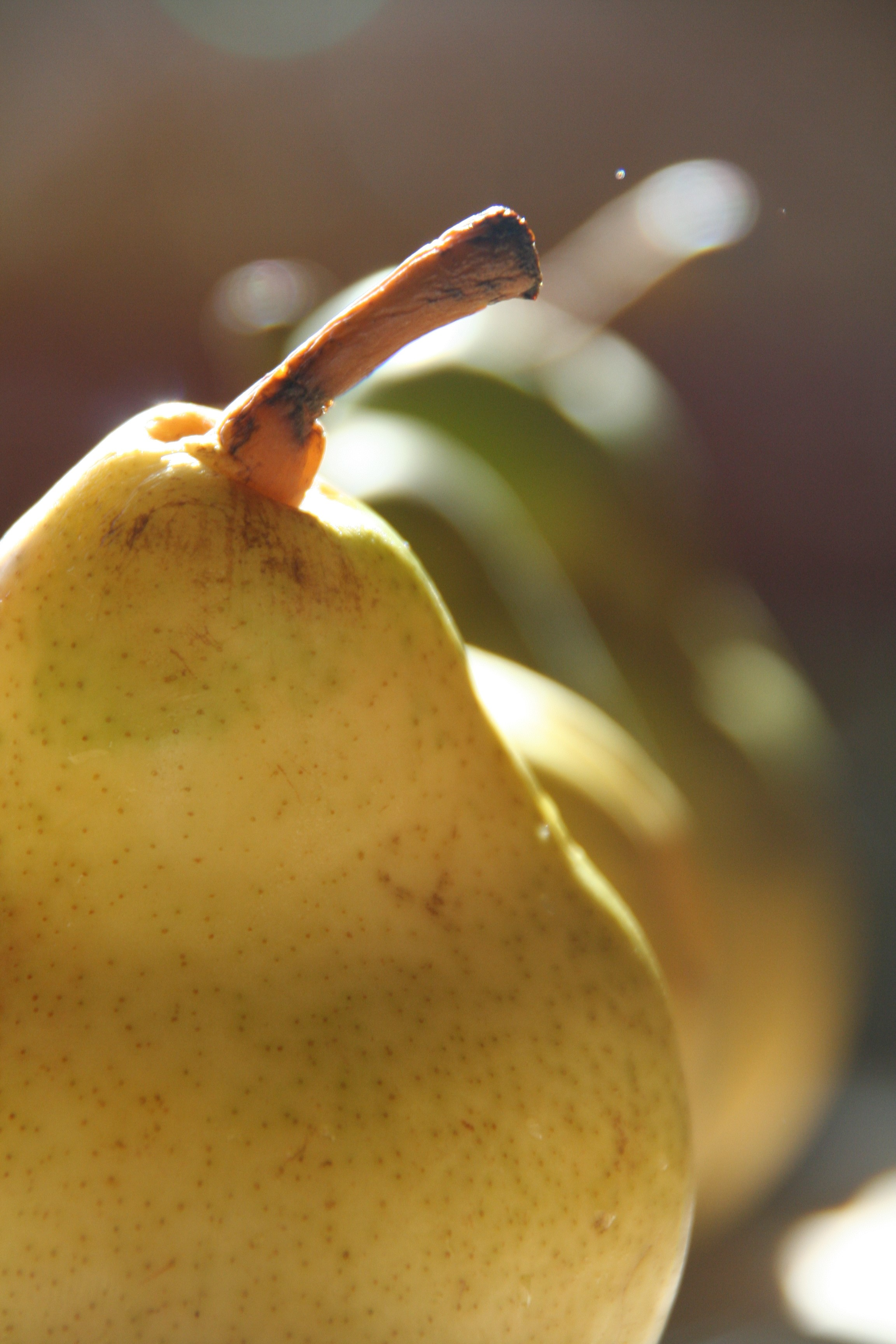 Pear - Pear is a lady.You can see through her.She has an entourage.She has hips.She is older than Christ.She has a shiny wrap.She has freckles.She has too many names.She has traveled around the world.She is transparent.She is good at dessert.
