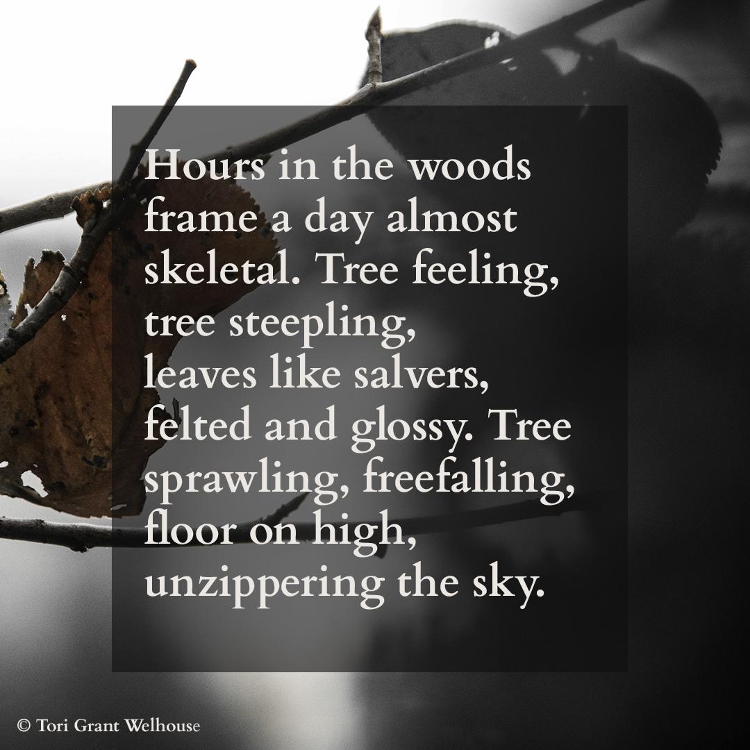 Tree Feeling.jpg