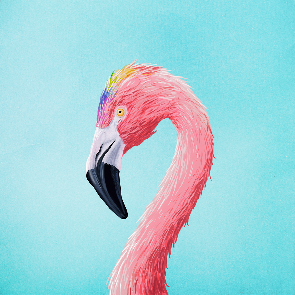 kennethlarsen-flamingo.png