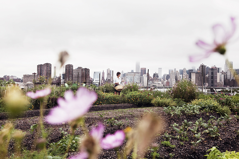 Eagle Street Rooftop Farm - New York