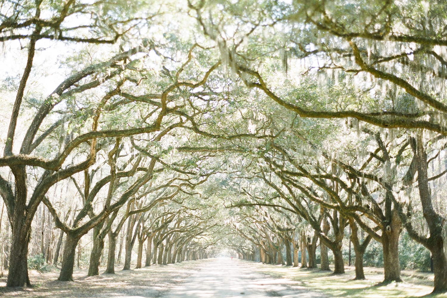 Wormsloe-Savannah.jpg