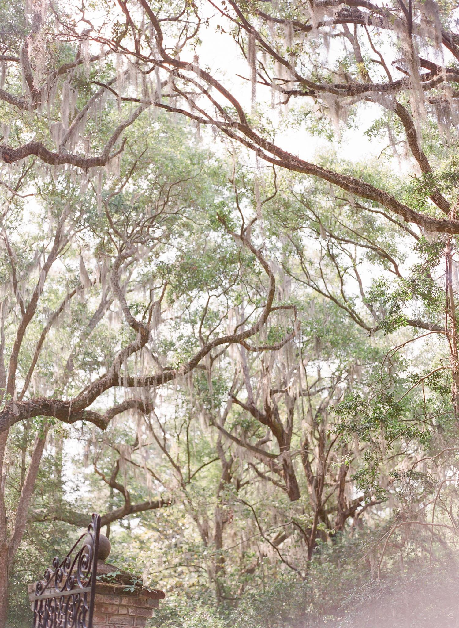 Charleston-Legare-Waring-Photographer-27.jpg