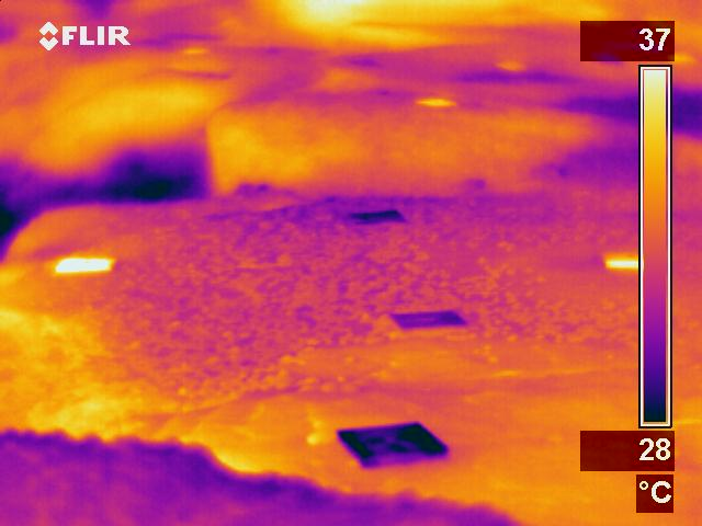 Infrared image of black and white settlement plates during aerial exposure deployed within the midshore region. Black plates are visualised as bright yellow / white colours whilst white plates are dark purple / blue.