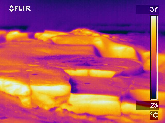 Infrared image of a rocky intertidal shore during a summer low tide.