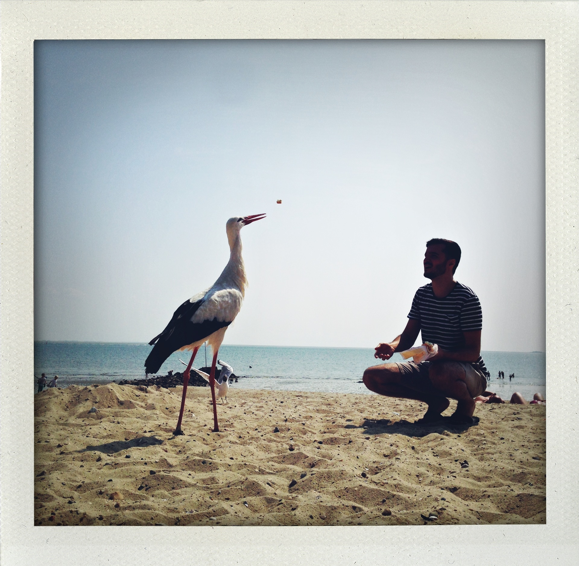Permission to feed the stork.