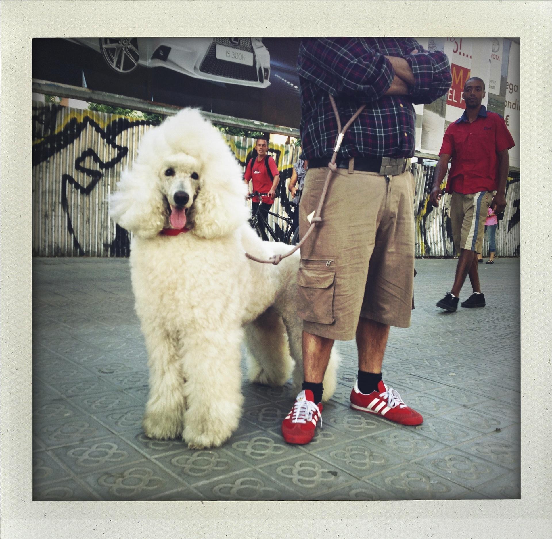 Permission to poodle.