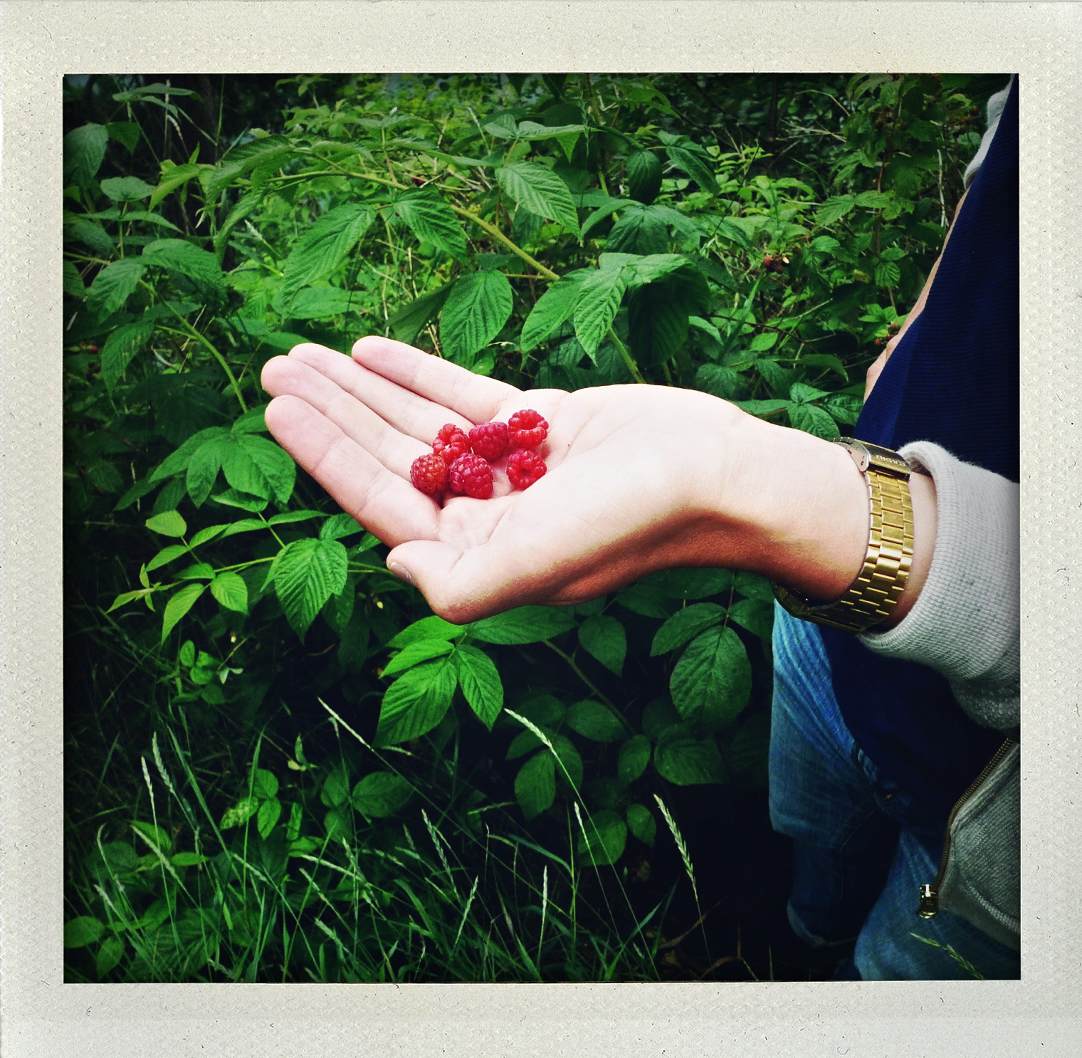 Permission to eat roadside raspberries.