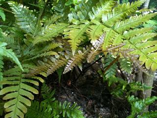 PlantSmartPhotos+006.jpg