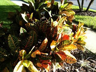 PlantSmartPhotos+011.jpg