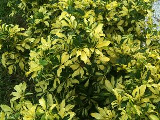 PlantSmartPhotos+596.jpg
