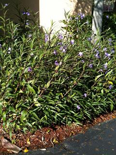 PlantSmartPhotos+036.jpg