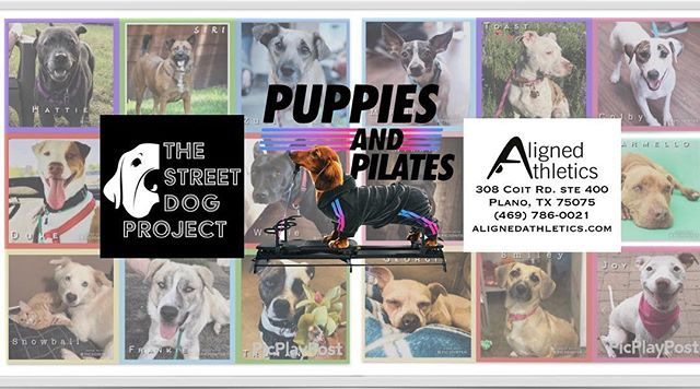 @alignedathletics is joining forces with @thestreetdogproject offering free reformer classes that feature dozens of adoptable puppies. Come explore the latest workout trend: Puppies and Pilates. Hopefully you'll find an adorable furry friend!