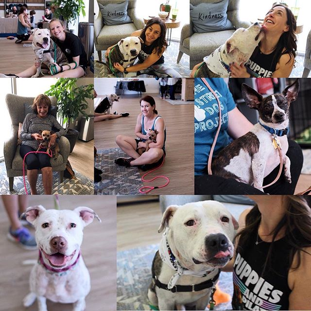 And back to what makes me really happy - rescue pups getting a chance to find a FUREVER home. Please adopt and don't shop. #adopt #puppiesandpilates #alignedathletics #thestreetdogproject #dallasdogs #dallasrescue #adoptdontshop