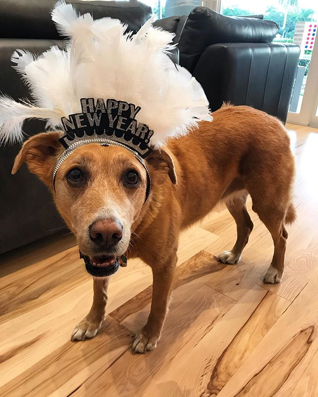 Time to em-bark on a paw-some New Year! #bonitablue #adoptdontshop
