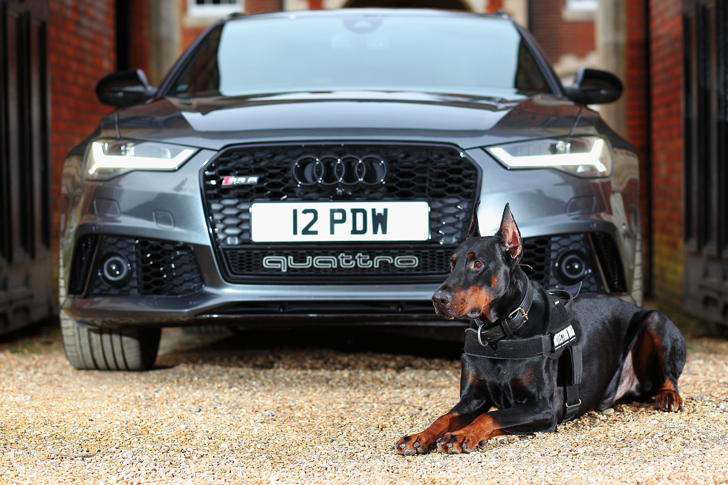 Protection Dogs Worldwide - Photoshoot at Lynford Hall