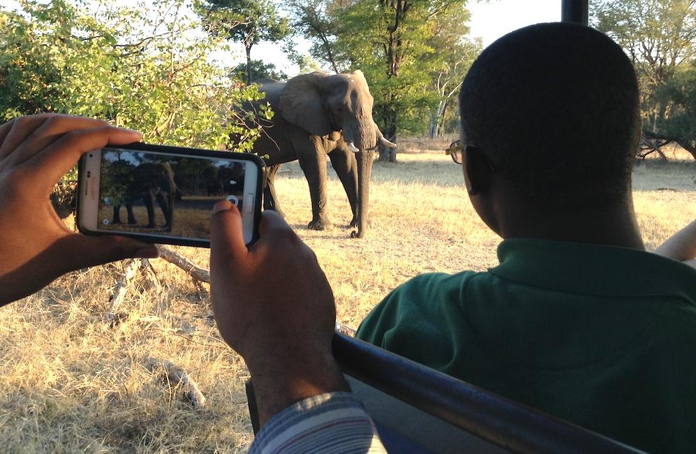 elephant_Zambia.jpg