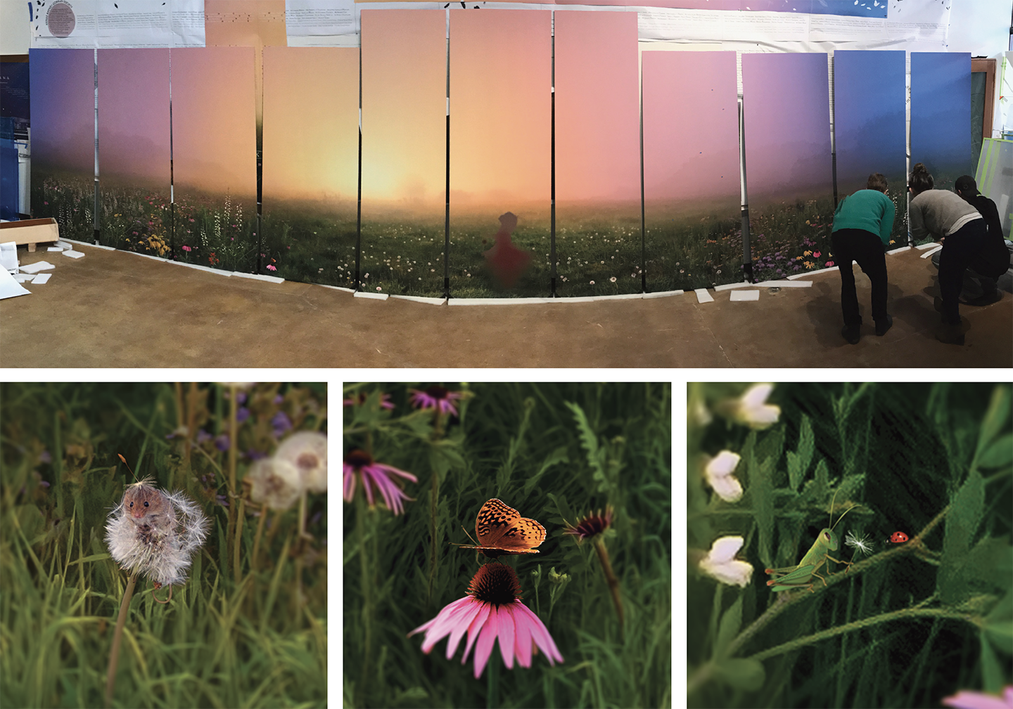 Above: examining our art backer before packing up for installation: thirty feet of illustration of Dayton's beloved Huffman Prairie at dawn.