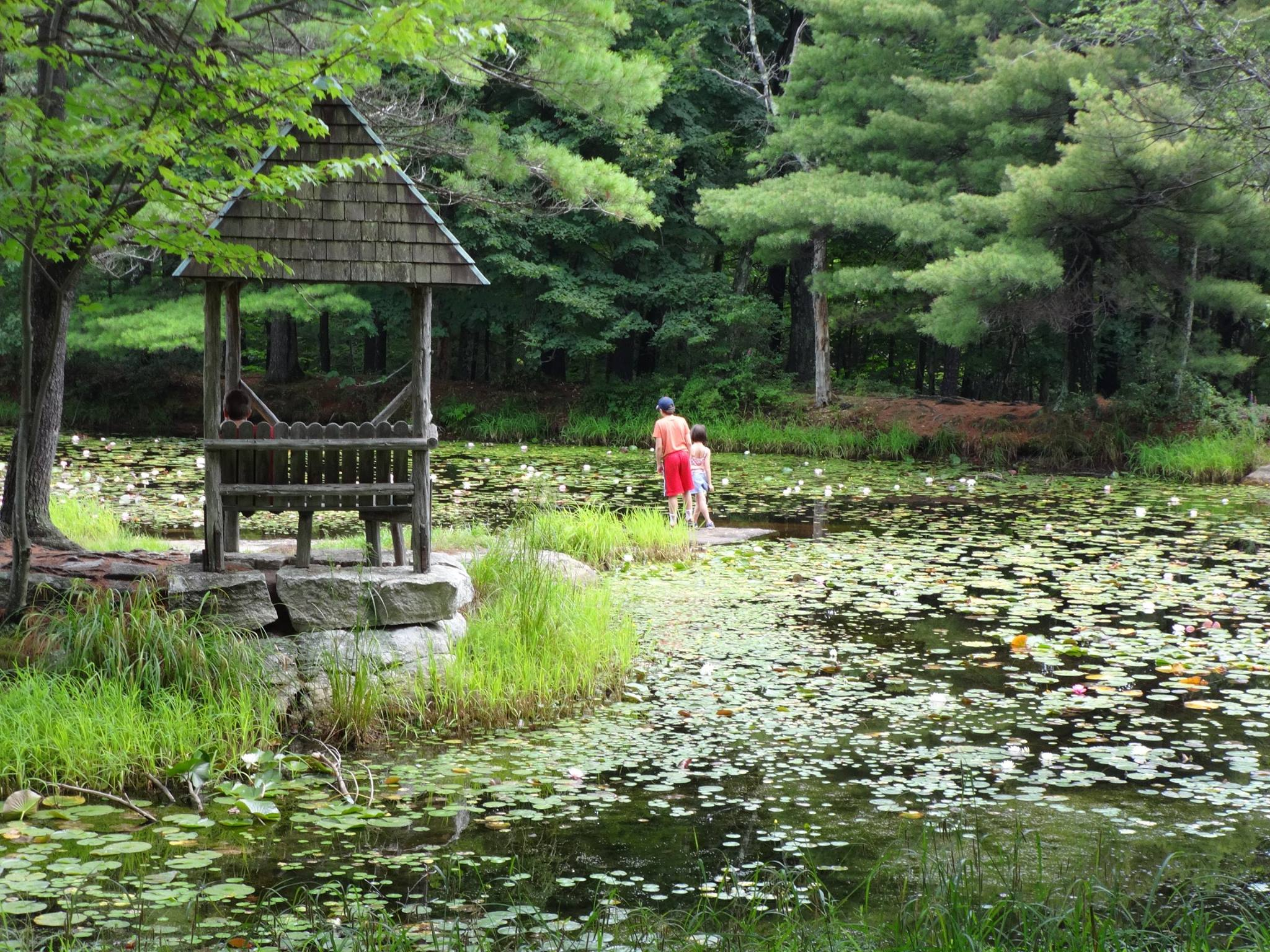 Exploring the Lily Pad Pond (Koehler Foisy photo)