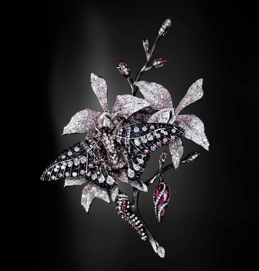 Jack-du-Rose poison moth.jpg