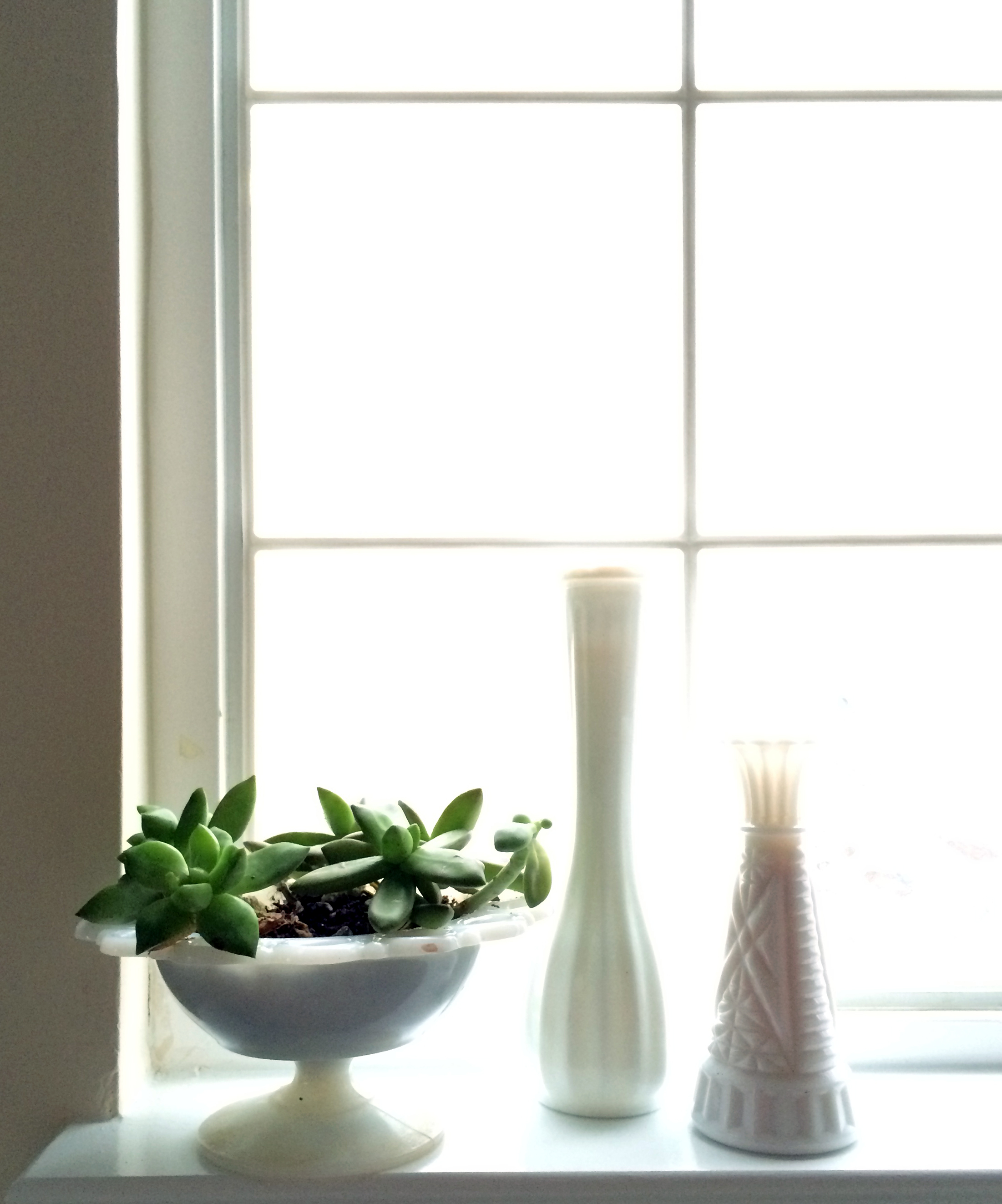 milkglass and succulents