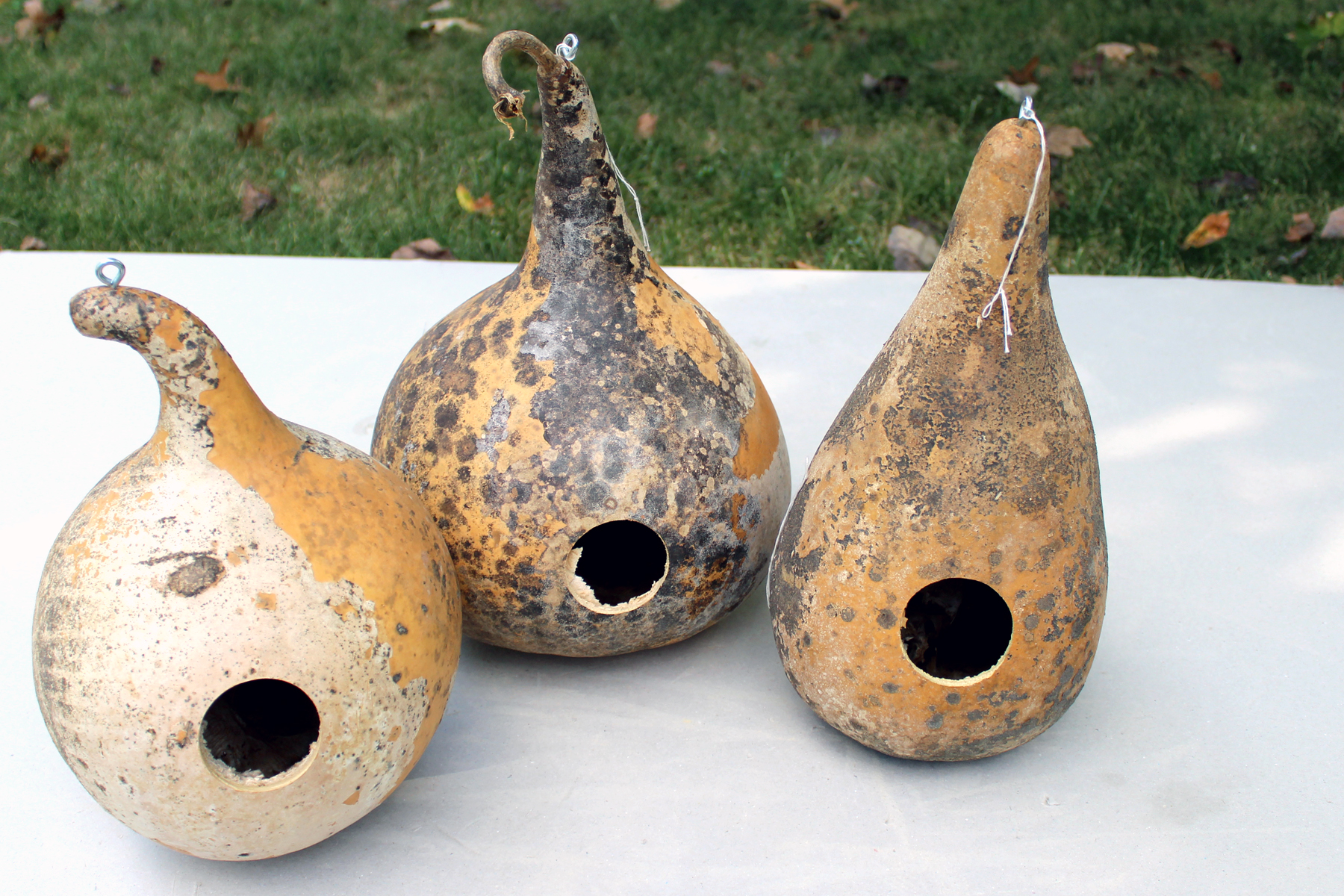 birdhouse gourds (before)
