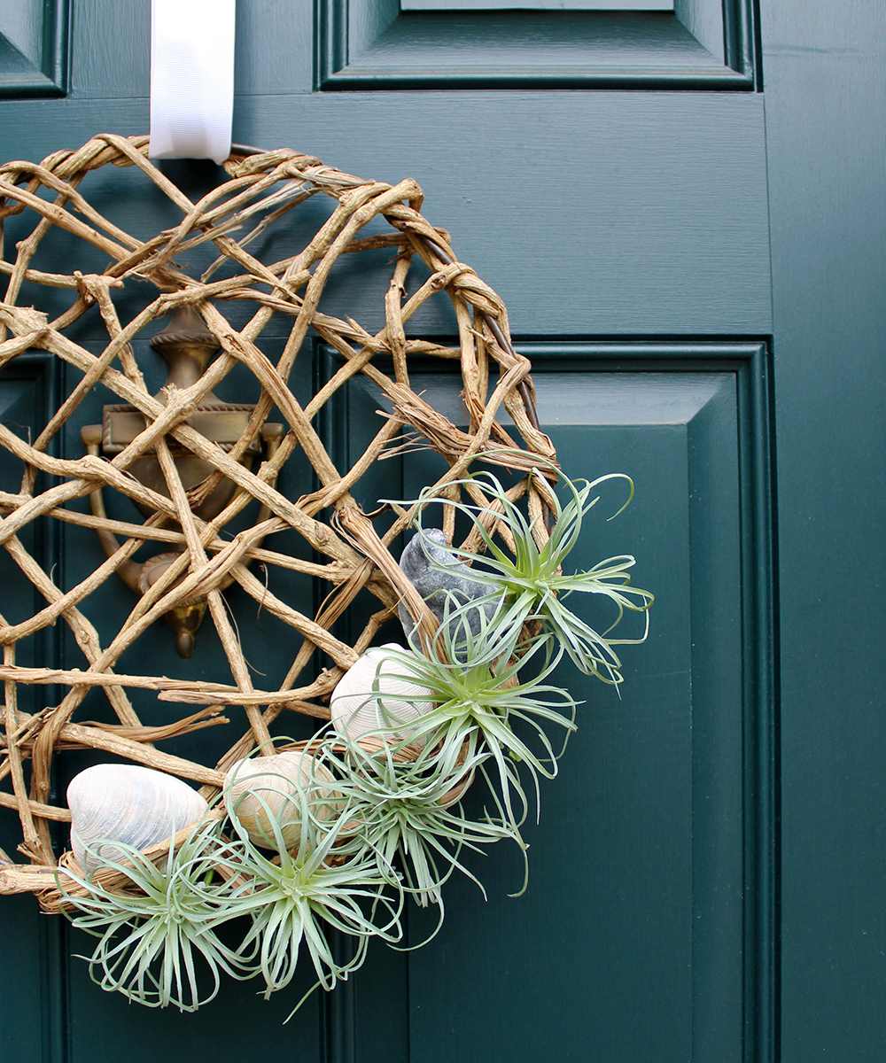 how to make an air plant wreath with seashells for $25 #summerDIY #creativewreath