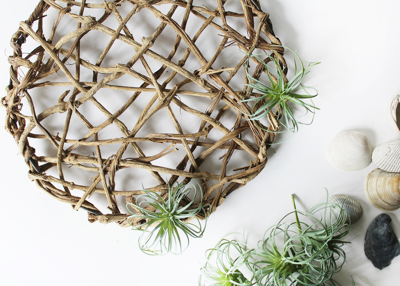 attach these two air plants first, then fill in the rest
