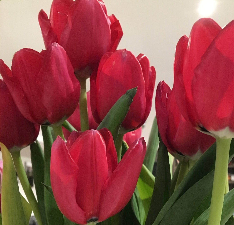FlowersTulips.jpg
