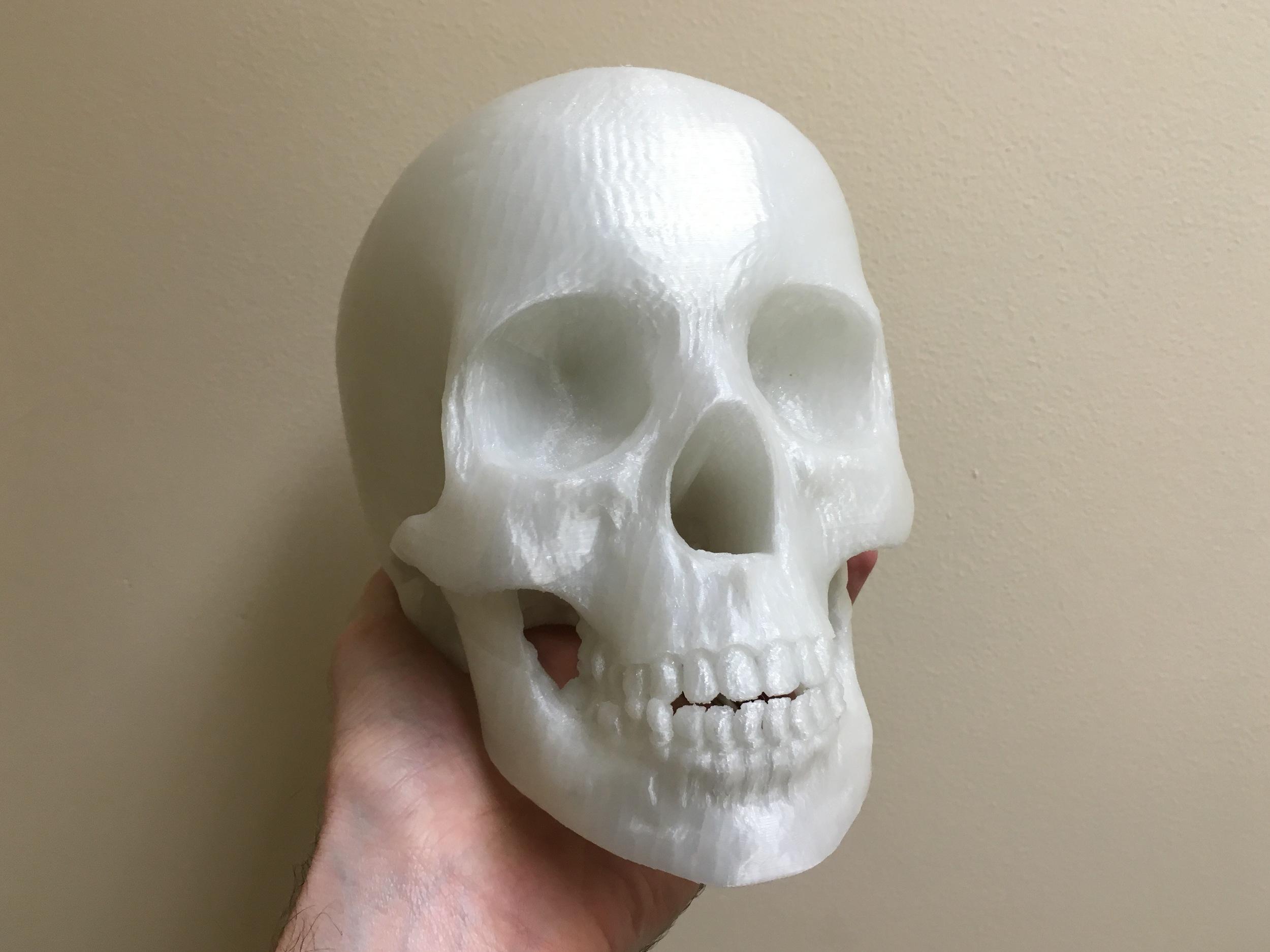 Life size 3D print of a human skull