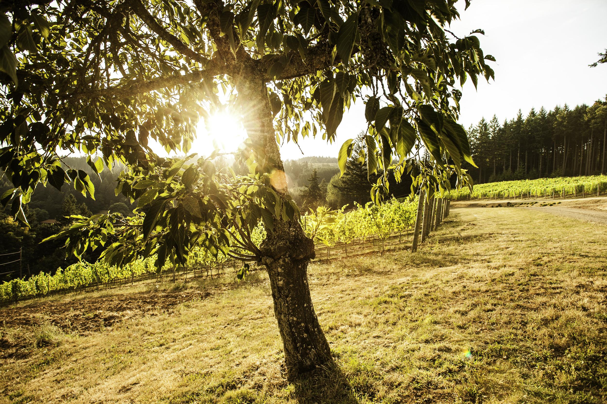 sunny tree and vines.jpg