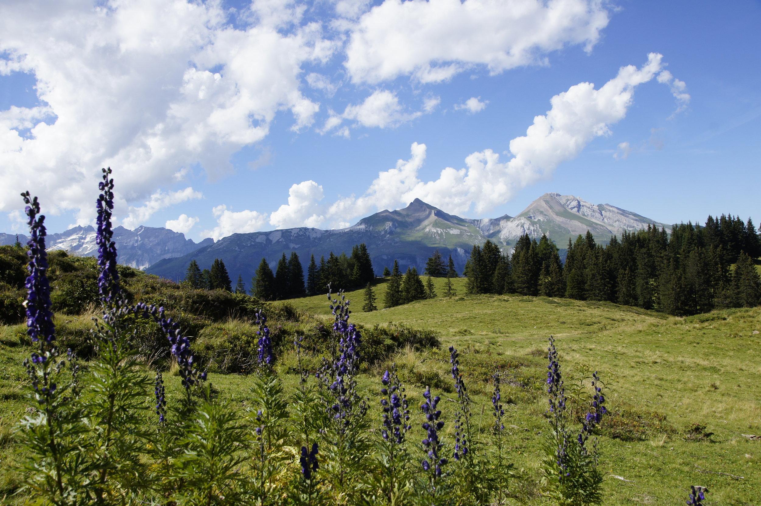 Swiss-meadows_freshly-pressed.JPG