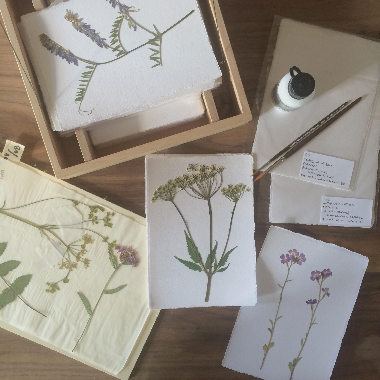 herbarium-how-to_pressed-images