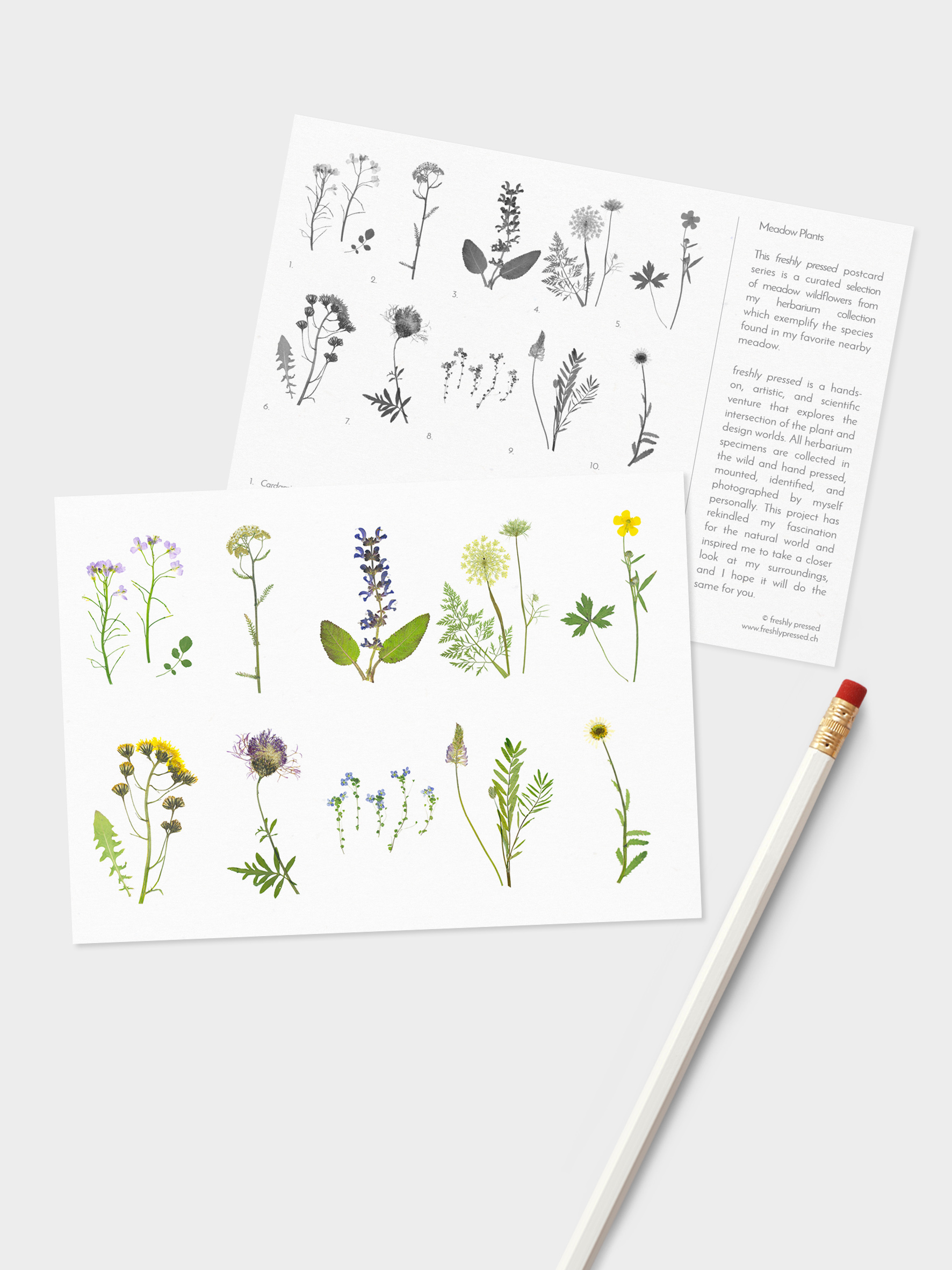 postcards - Choose your favorite theme for a 10-pack of informational postcards, each featuring a curated selection of plants and wildflowers from my herbarium collection.