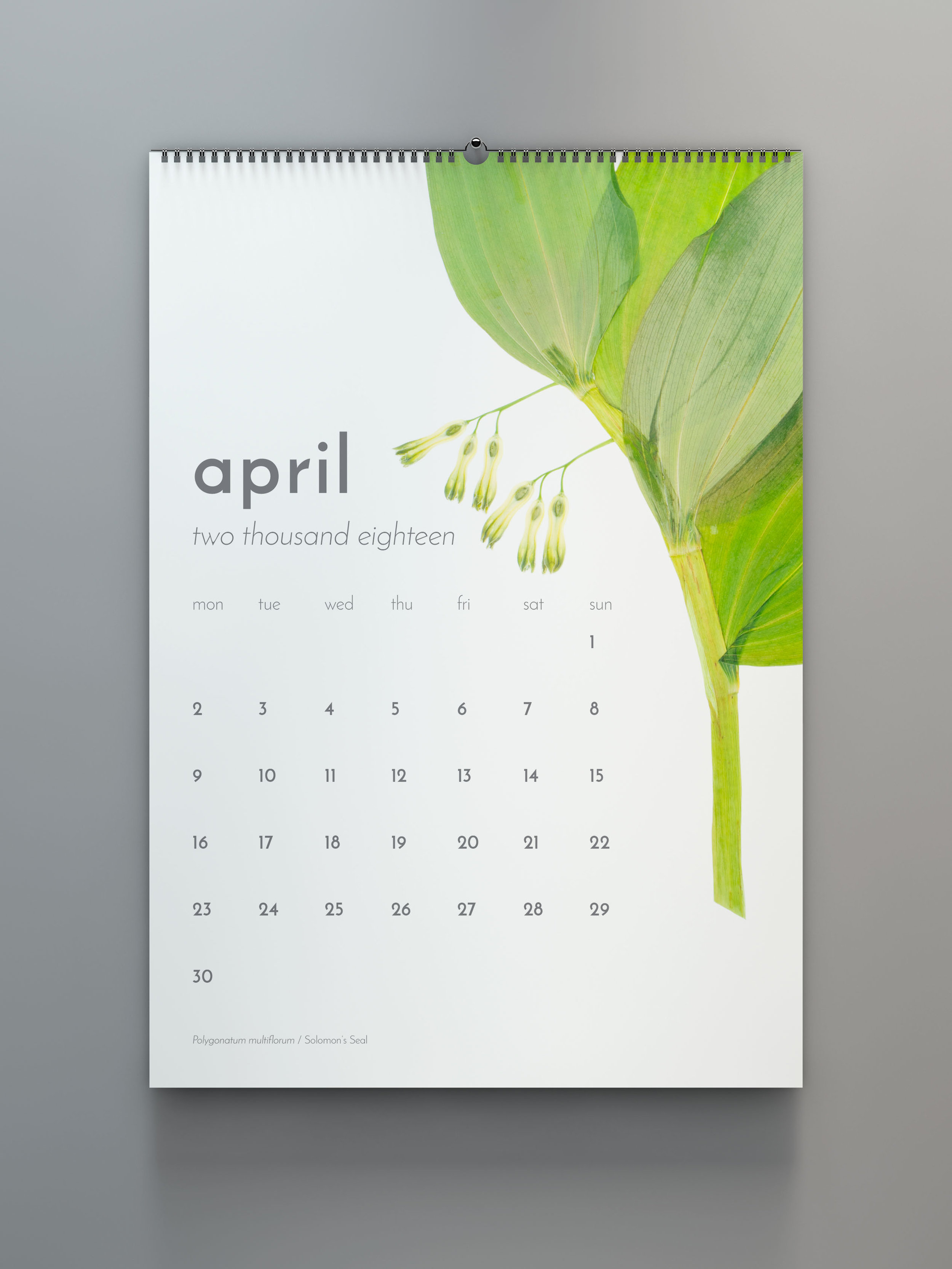 calendars (available again in 2020) - Follow the wildflowers through the changing seasons with informational calendars in English or German that introduce a new plant each month, during its time of prominence in the Swiss landscape.