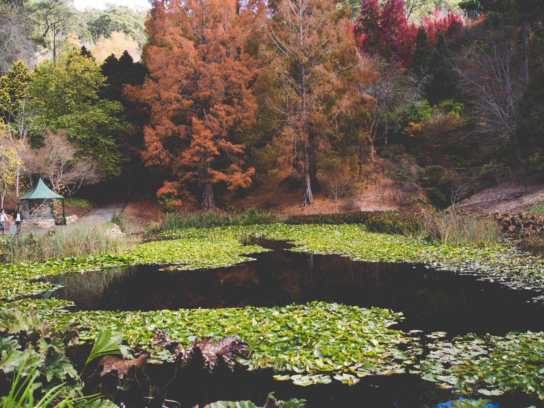 mount-lofty-botanic-garden-fill-me-in.jpg
