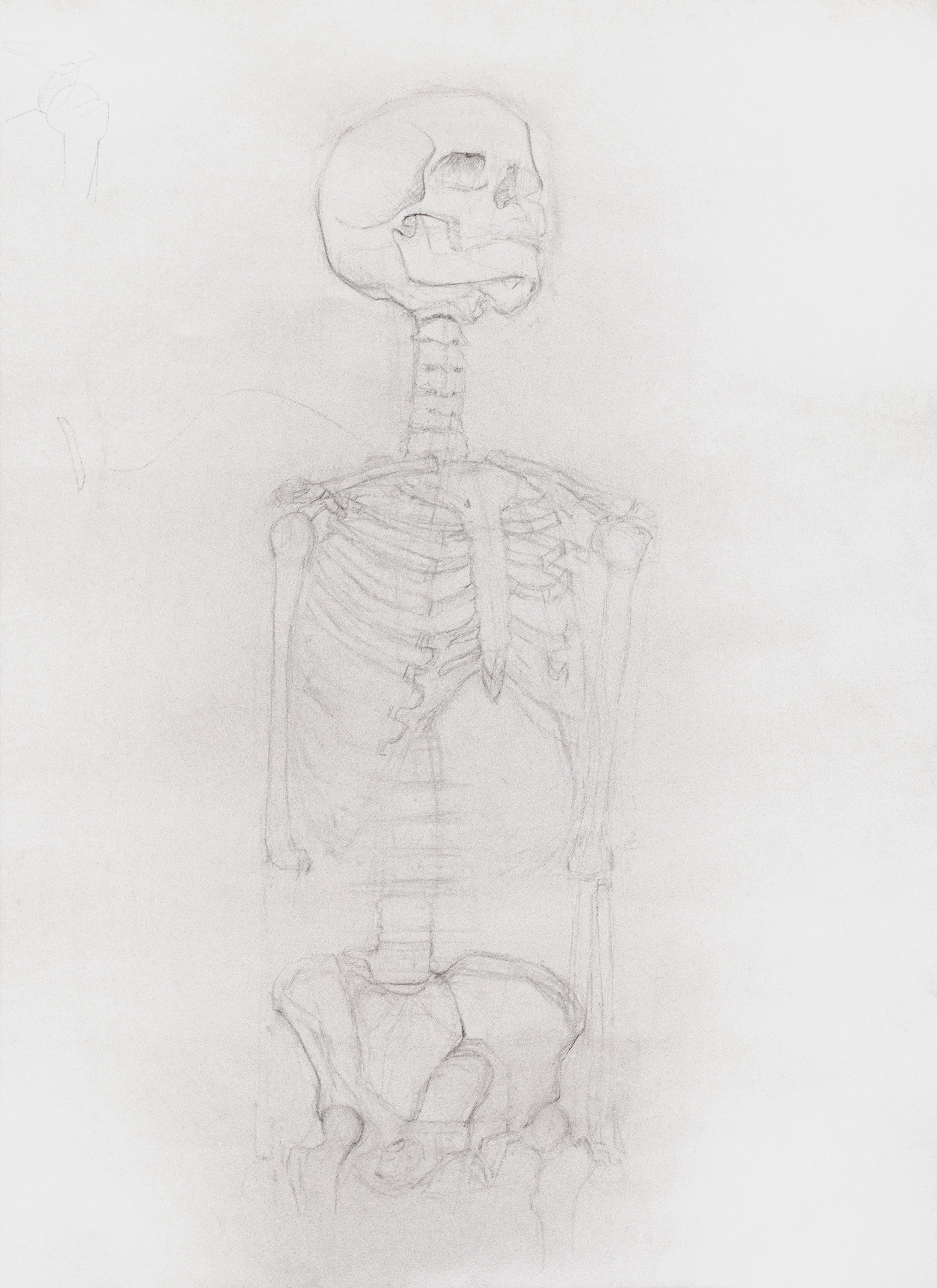Rron Bajri Zeichenstift auf Papier 2015  Menschliche Anatomie für Künstler: eine offene Klasse II  im Menschen Museum