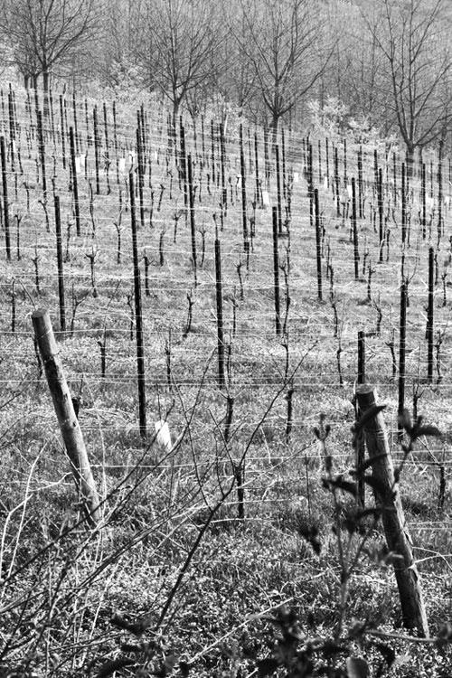 Pinot Noir: 9% - Deep marl & tuff mixSlight slopeSouth facingNatural turfPruning style: Guyot7 years old6000kg/ha9 months French oak➝ GPS Coordinates