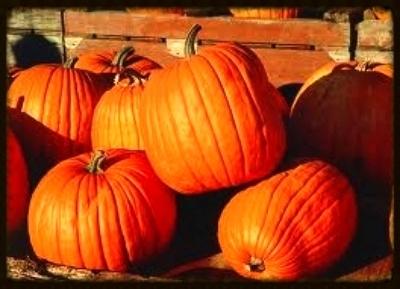 Pumpkins 2013.jpg