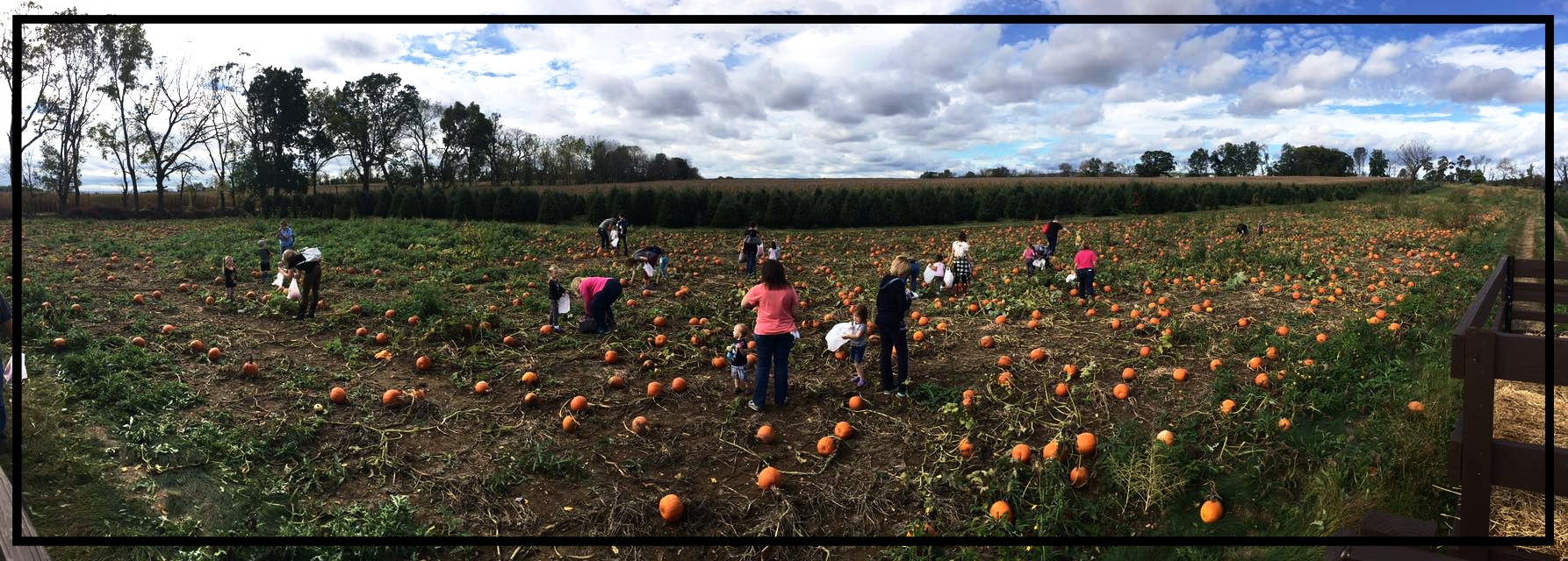Private Pumpkin Patch For Our Younger Birthday Party Guests.