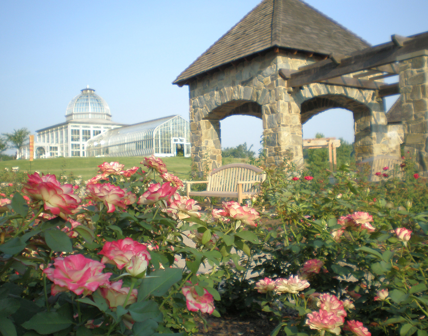 Pink tipped Roses with Conservatory and Rose Belvedere.jpg