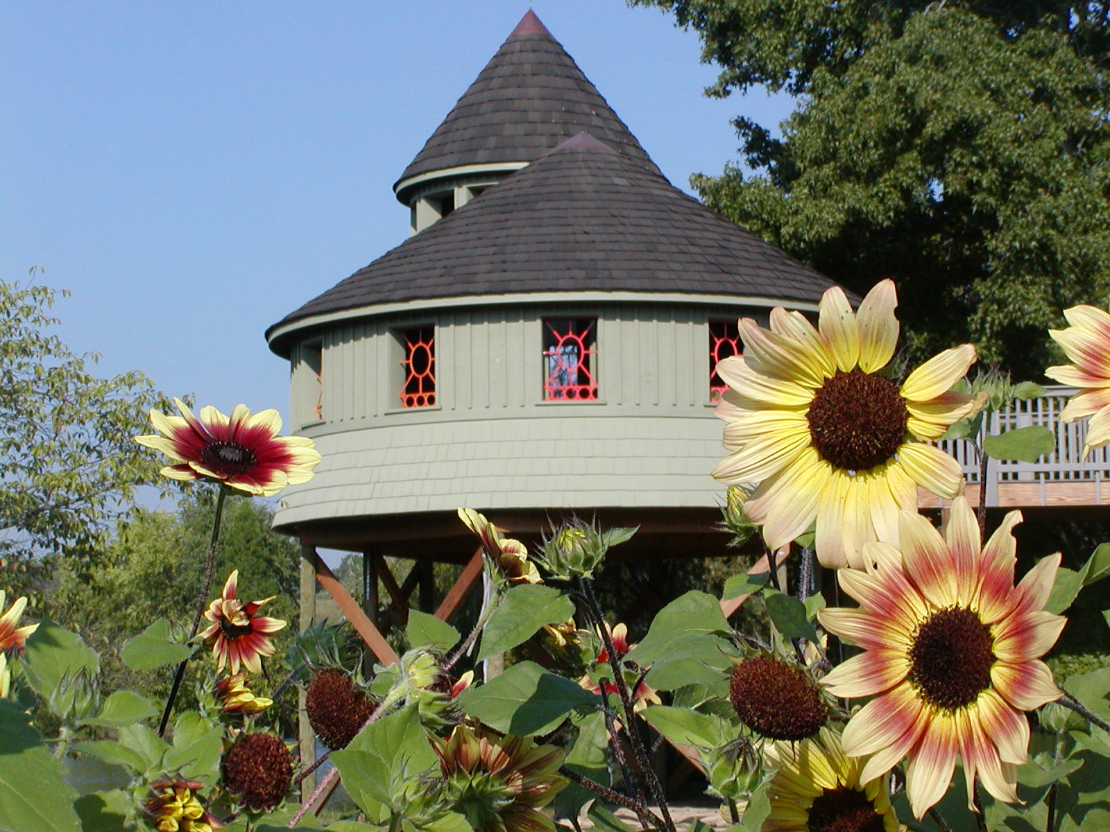 Summer Sunflowers Tree House.jpg