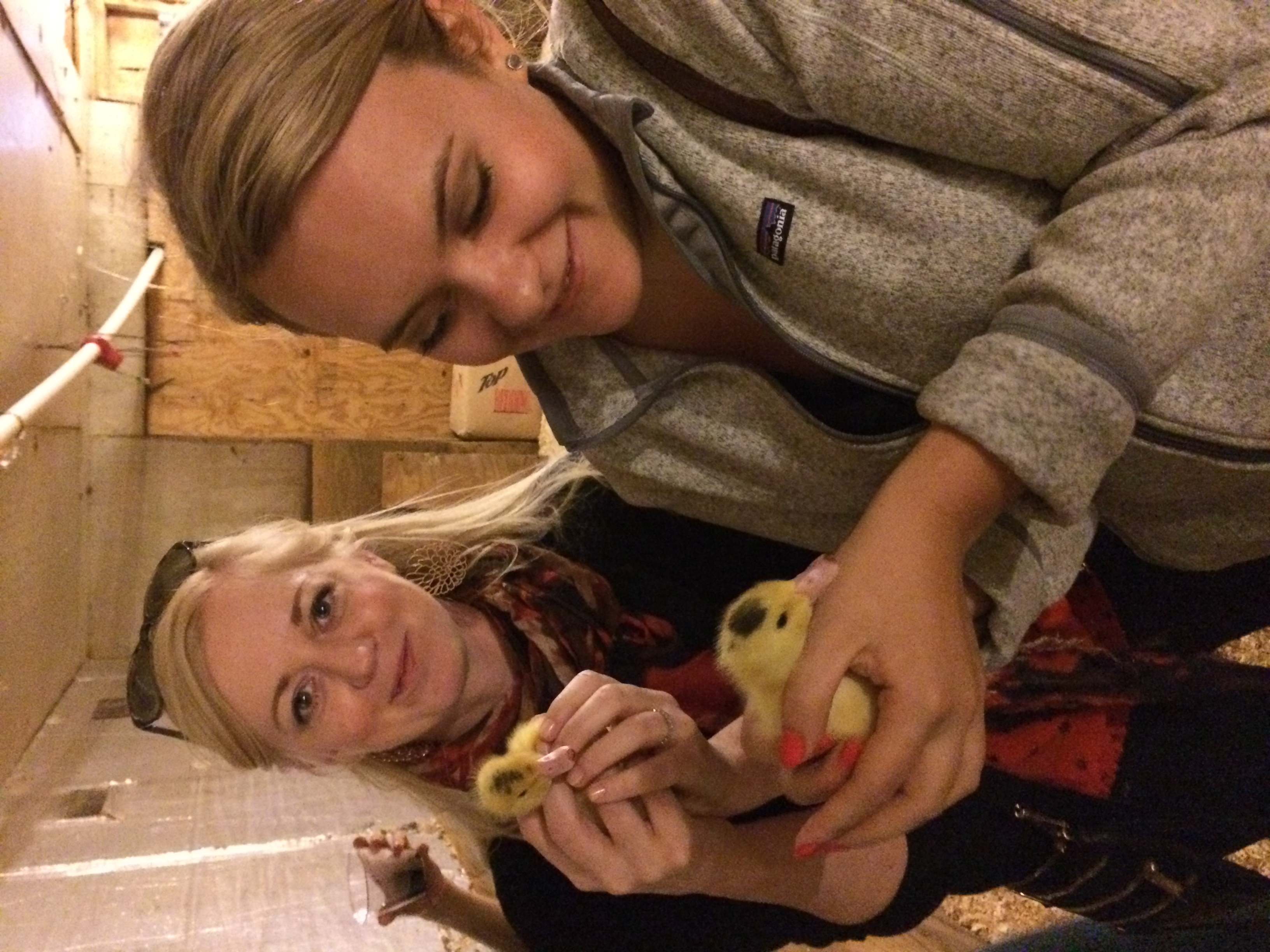 Marion and I holding five-day old chicks. Such sweet little things. Contrary to the picture, they are actually quite difficult to hold. Those wings flap with a vengeance. Even still, totally heavenly.