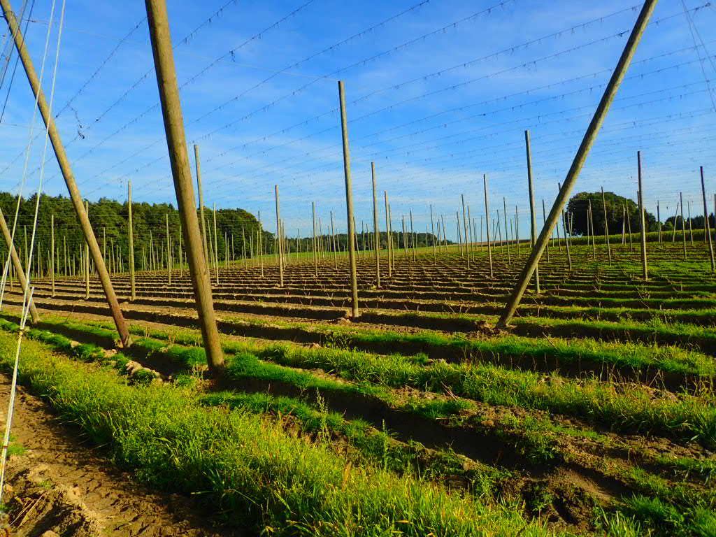 31 - Hops fields all over Rohr and that area.jpg